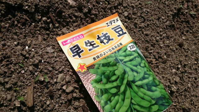 家庭菜園で創れる枝豆